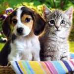 День здоровья для котят и щенков 13 и 14 мая